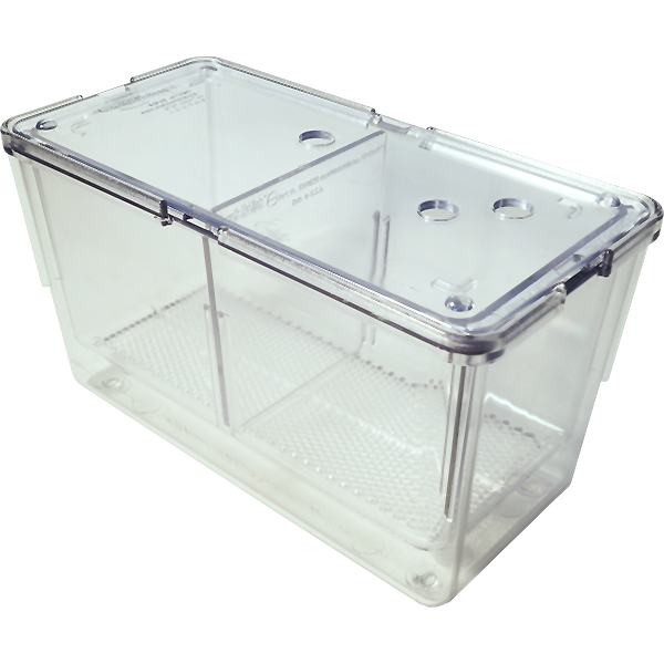 Zebrafish spawning breeding box tank kit